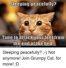 Grumpy Cat Sleep Meme - 25 best memes about cat cat memes