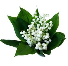 of the valley flower buy of the valley wedding flowers at wholesale price