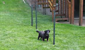temporary fencing for dogs remarkable best 25 dog fence ideas on