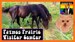 Florida travel pony images Rv travel paynes prairie visitor center micanopy fl best jpg