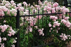 a rose covered cottage hometalk