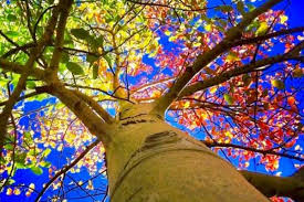 symbolism trees the universal symbolism and importance of trees throughout history