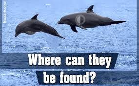 amazing facts about dolphins that u0027ll arouse the curiosity of kids