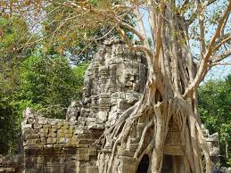 2006年1月28日11 ta som will the tree climb up to the