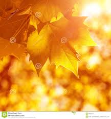 abstract autumn background old orange leaves dry tree foliage