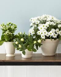 White Flower Arrangements Cheap White Flower Arrangements Tips For White Diy Flower