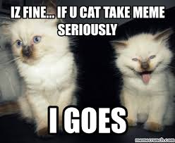 Meme Seriously - fine if u cat take meme seriously