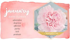 flower of the month january birth flower carnation ftd