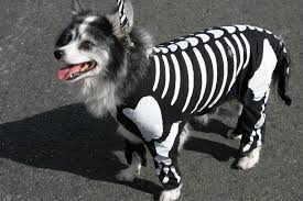 Skeleton Costumes For Halloween by Top 5 Adorable Pet Costumes This Year U0027s Halloween