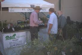 native plant nursery sydney native plant suppliers at the collectors u0027 plant fair 2015 mallee