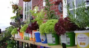 balcony kitchen gardening ideas for limited space garden talk