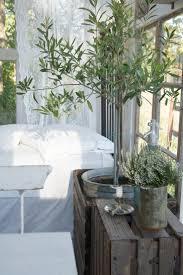 decoration terrasse exterieure moderne olivier en pot pour la terrasse ou le balcon conseils et photos