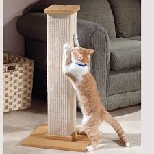 Cat Scratcher Replacement Pads Cat Scratching Post Ultimate Scratching Post At Drs Foster U0026 Smith