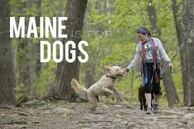 How Do Blind Dogs Know Where To Go Dog Friendly Maine Guide Dog Beaches Travel And Adventures