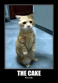 No Cake Meme - 47 most funny cake meme images pictures photos picsmine