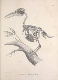 25 trending sketches of birds ideas on pinterest bird sketch