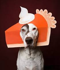 pets and thanksgiving animal hospital