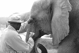 Blind Men And The Elephant Story For Children Man Is A Surrogate Mother To More Than 60 Orphaned Elephants