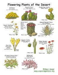 desert flowering plants