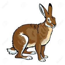 jackrabbit siting brown hare clipart panda free clipart images