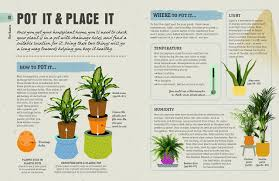 do aloe plants need sunlight how not to kill your house plant survival tips for the
