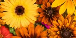 send flowers nyc send flowers as gifts this fall symbolism 3 popular colors