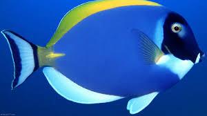 wallpaper fish swimming on pc wallpapersafari