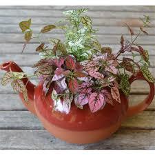 red clay english pottery decorative ceramic pots kinsman company