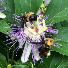 native plants for bees our top 10 favorite pollinator plants for the summer garden