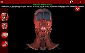 A Picture Of The Human Anatomy Muscular System 3d Anatomy Android Apps On Google Play