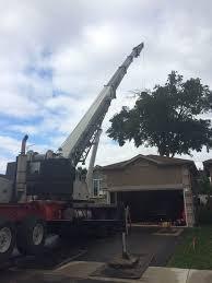 Backyard Artillery Large Elm Tree From Backyard With Crane In Barrie Sugar Bush