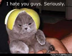 I Hate You Meme - i hate you guys viral viral videos