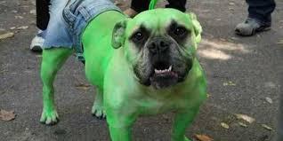 Halloween Costumes Boxer Dogs Beirut 5 Funny Halloween Pet Costume Ideas Create