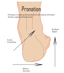 Skeletal Picture Of Foot Overpronation Of Foot Bone And Spine