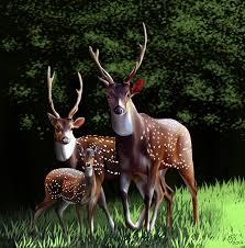deer family fanart by madixb1 on deviantart