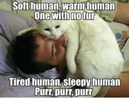 Sleepy Cat Meme - soft humanwarm human one with no fur tired human sleepy human purr
