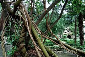 image gallery tree rope