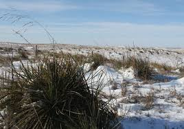 high pasture prices hard for ranchers to swallow netnebraska org