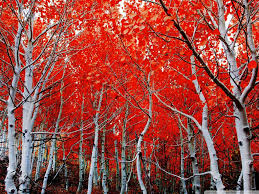 sierra nevada red trees hd desktop wallpaper widescreen high
