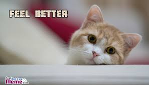 Feel Better Meme - better cat meme
