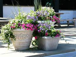 Home Decorating Plants Potted Plants For Patio Home Outdoor Decoration