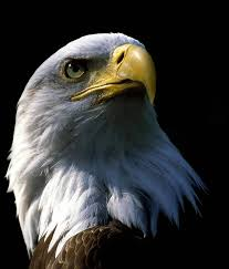 strange eagle wallpapers the largest eagles u2013 top 10 dinoanimals com