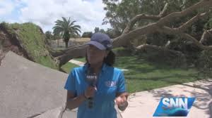 report 50 foot tree falls on venice home after hurricane
