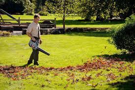 2017 best grass seed reviews u0026 buyers guide yard care gurus