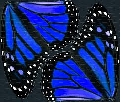 blue monarch butterfly wings fabric bonnie phantasm spoonflower