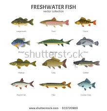 fish stock images royalty free images vectors