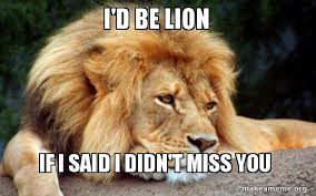 Miss You Meme - i d be lion if i said i didn t miss you confession lion make a