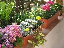 balkon blumen tipps pflege balkonblumen bewäserung balkon blumen giesen