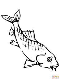 koi fish art coloring page free printable coloring pages