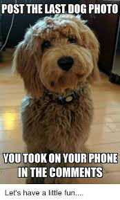 Dog Phone Meme - post the last dog photo you took on your phone in the comments